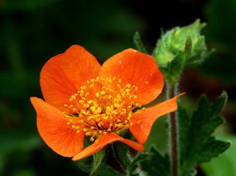 In Bright Orange