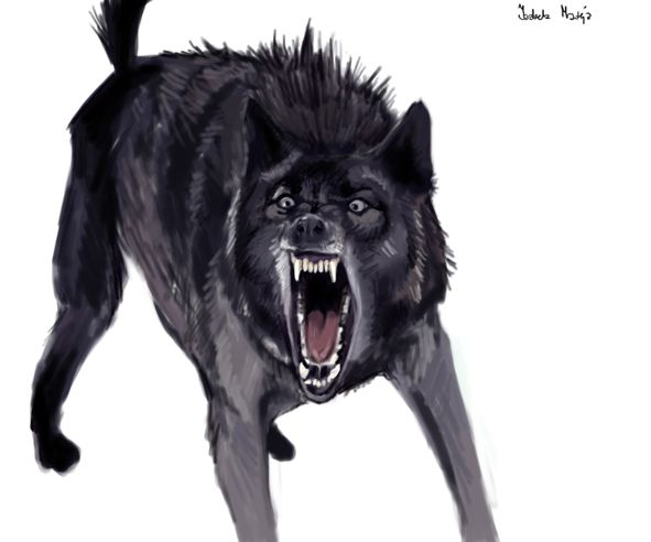 angry animals wolf by Angry Black Wolf Drawing