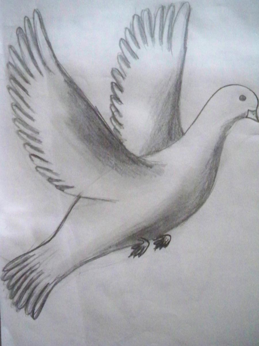 dove sketch