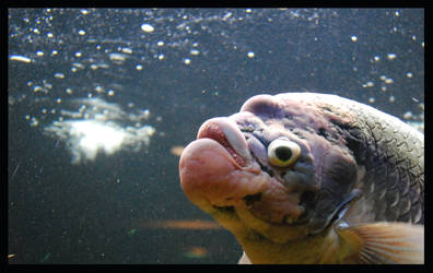 Happy Fish by Teh-Ked