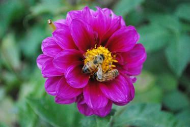 Honeybees by Teh-Ked