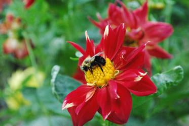 Bumblebee by Teh-Ked