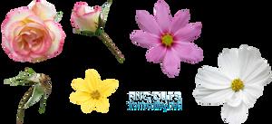 Flower .PNGs