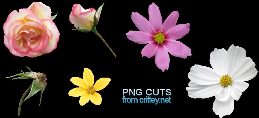 Flower .PNGs by crittey