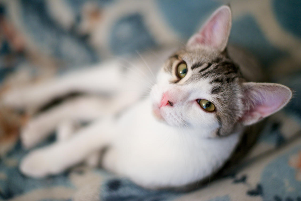 Milky Cat by Katune-chan on DeviantArt