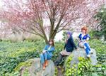 NCSp19 - DoA Blossoms by BlizzardTerrak