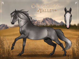 Mare References 1-1000 on Cottonwood-Valley - DeviantArt