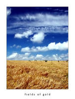 Fields Of Gold by MarkioS14
