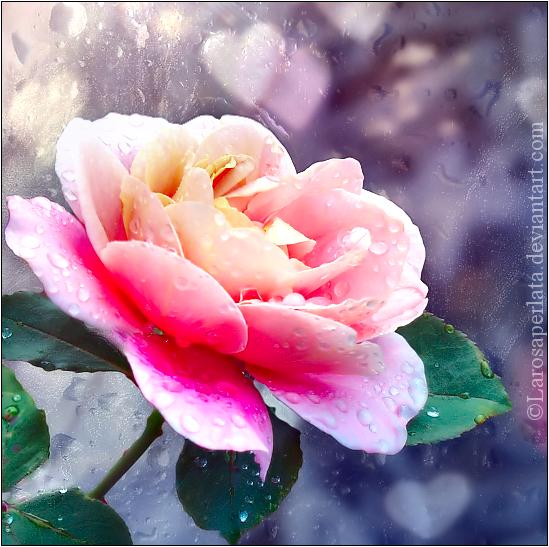 .Pure romance. by larosaperlata