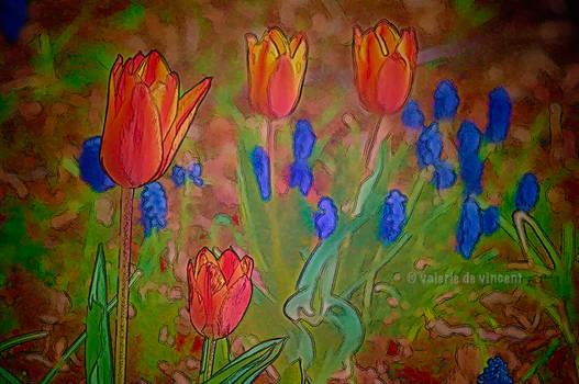 Tulips and Muscari