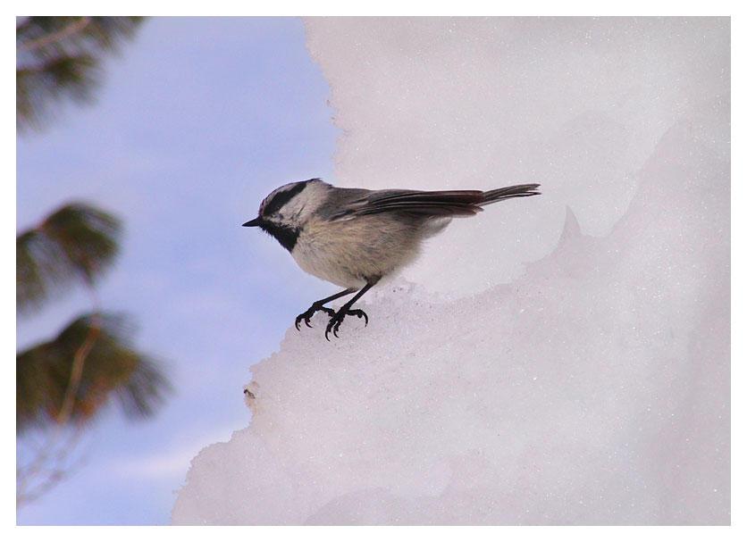 Bird on the Edge by zasu