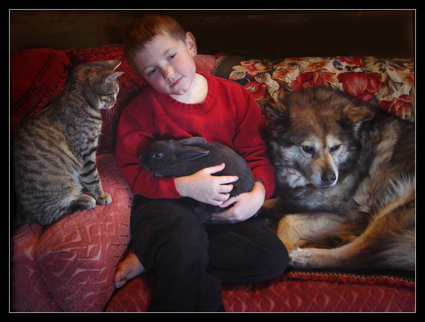 Cat Rabbit Wolf Wolf pt 1 by zasu