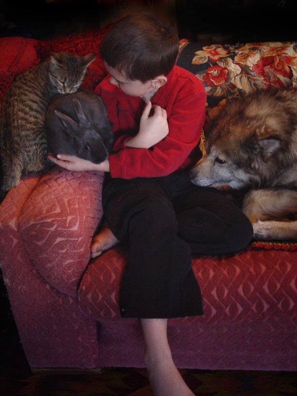 cat rabbit boy wolf pt2 by zasu
