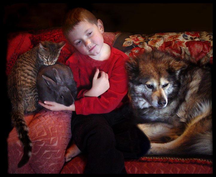 cat rabbit boy wolf pt 3