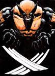Wolverine color sketch