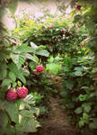 Through the Raspberry Arches by CharlottaRose