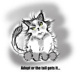 Charity Cat001