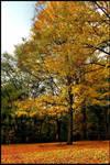 Autumn..Again by j0s2m21