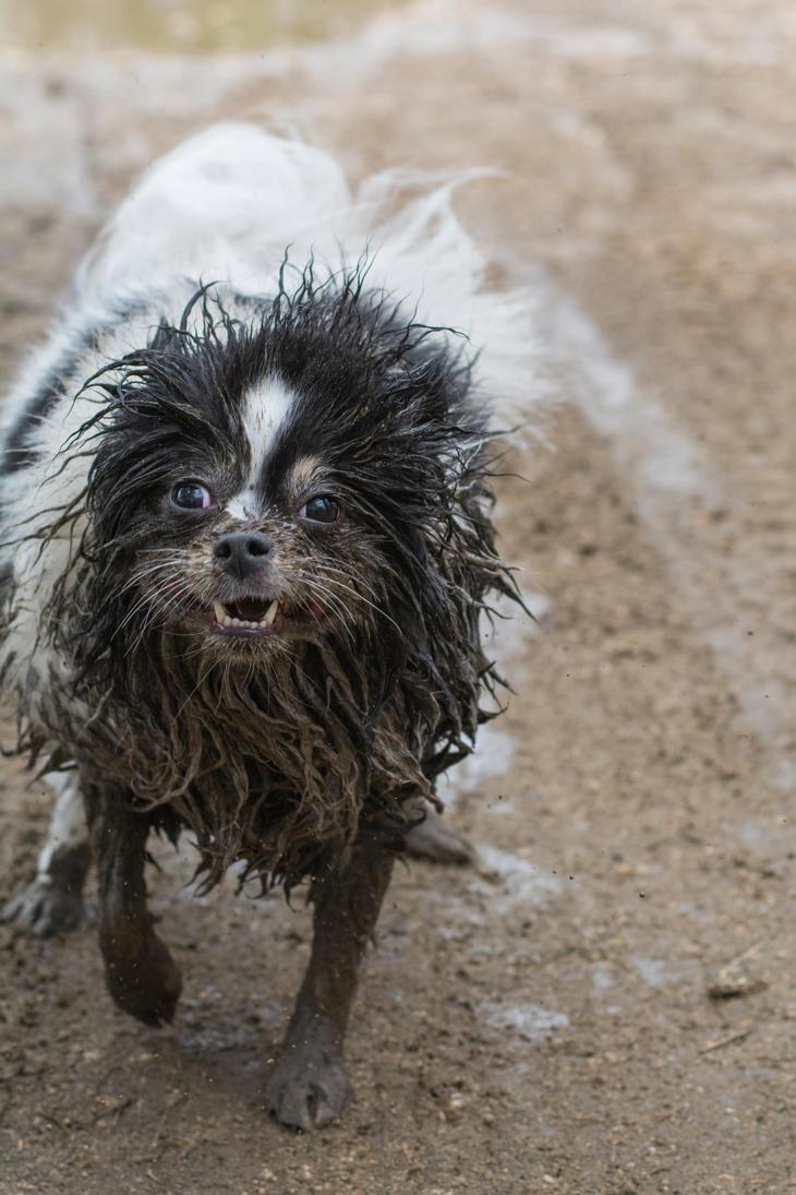 Fun in the Mud by eyyyKim