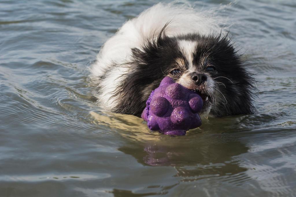 Water Dog by eyyyKim