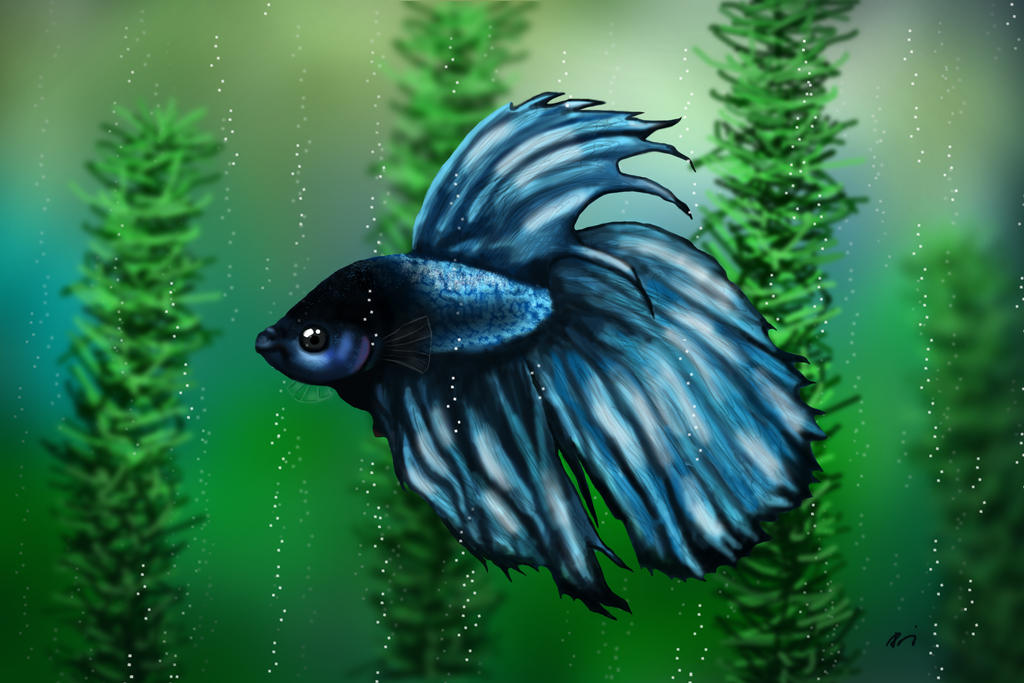 Betta by lilalo-art
