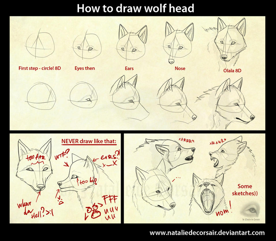 -http://th08.deviantart.net/fs71/PRE/i/2010/239/1/0/Wolf_head_tutorial_by_NatalieDeCorsair.jpg