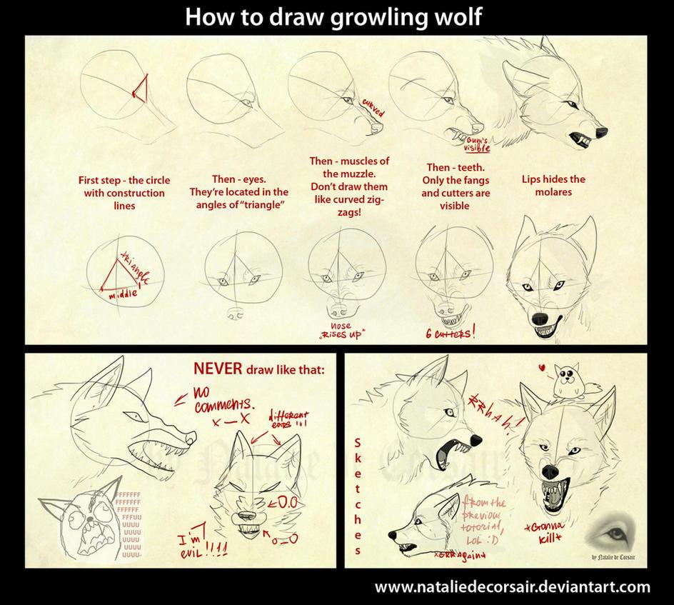 http://th02.deviantart.net/fs70/PRE/i/2010/241/d/8/growling_wolf_tutorial_by_nataliedecorsair-d2xiz3k.jpg