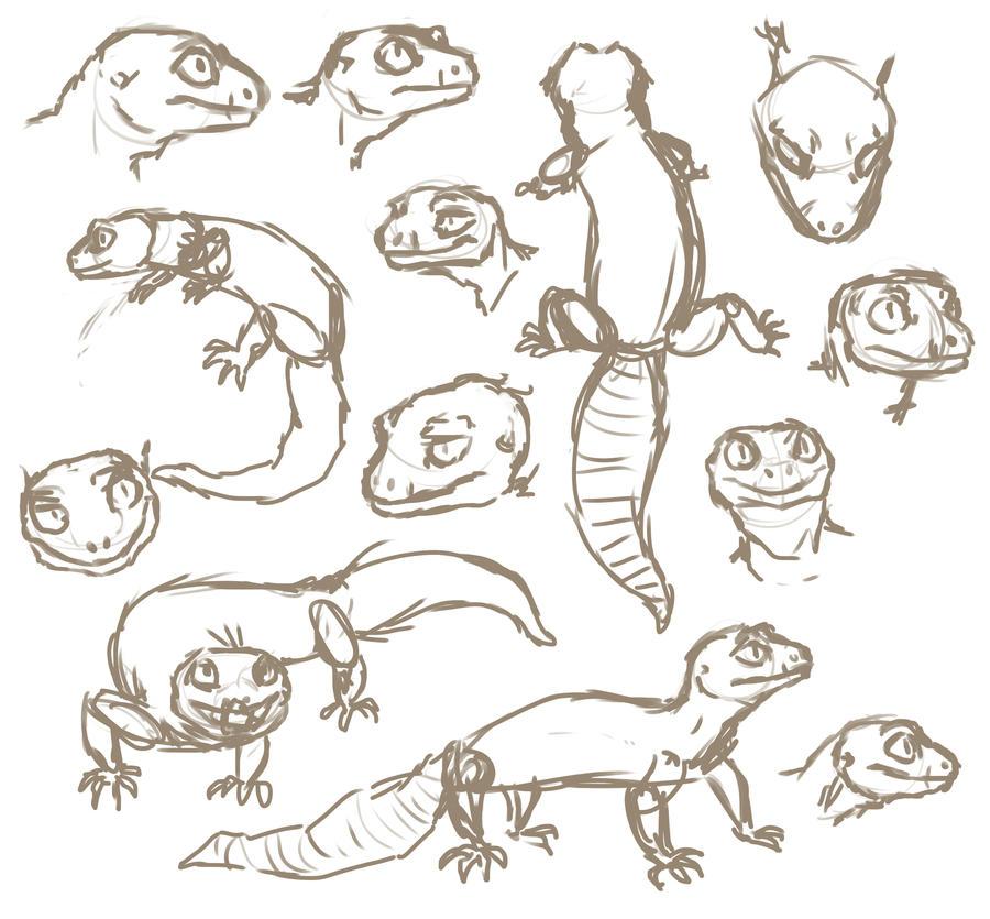 Anatomy of a gecko