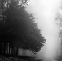 Follow your way... by A2Matos
