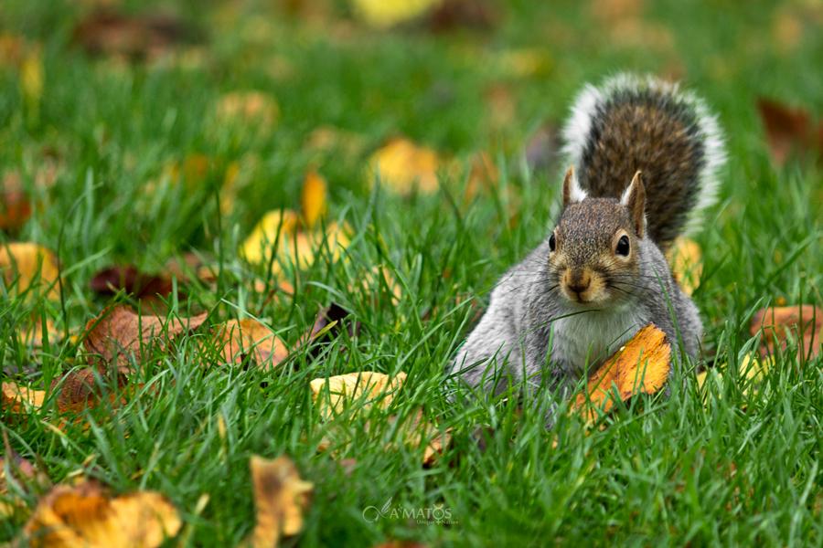 Got Nuts ? by A2Matos