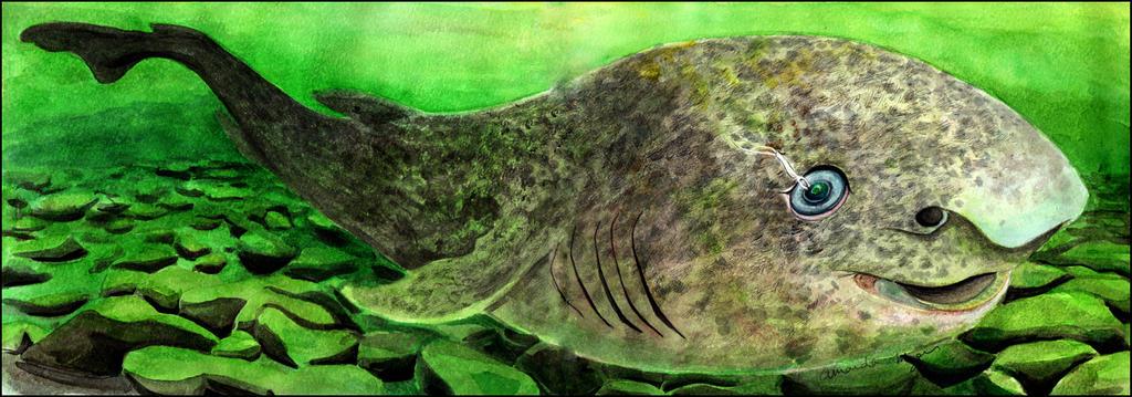 Greenland Shark By Amandamyers On Deviantart