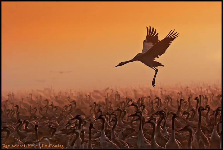 Move...i am coming by Aderet