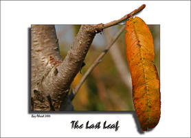 The Last Leaf by Aderet