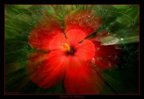 Bloom In Motion