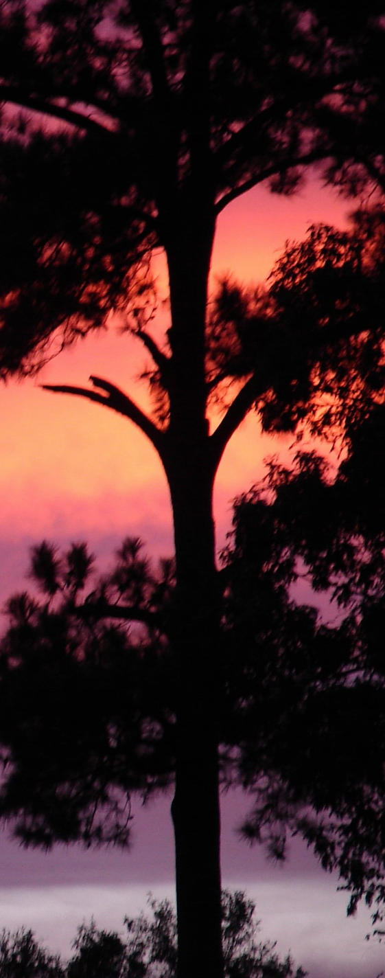 Colorful Tree Silhouette by Sharondipity