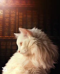 White Cat by Rexionete