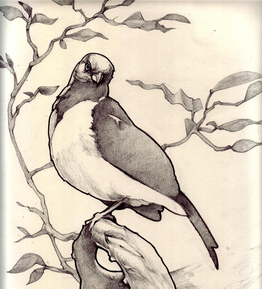 Birdie1 by JerrySabatini