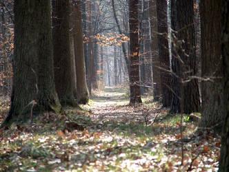 Forest in Poland by przekret