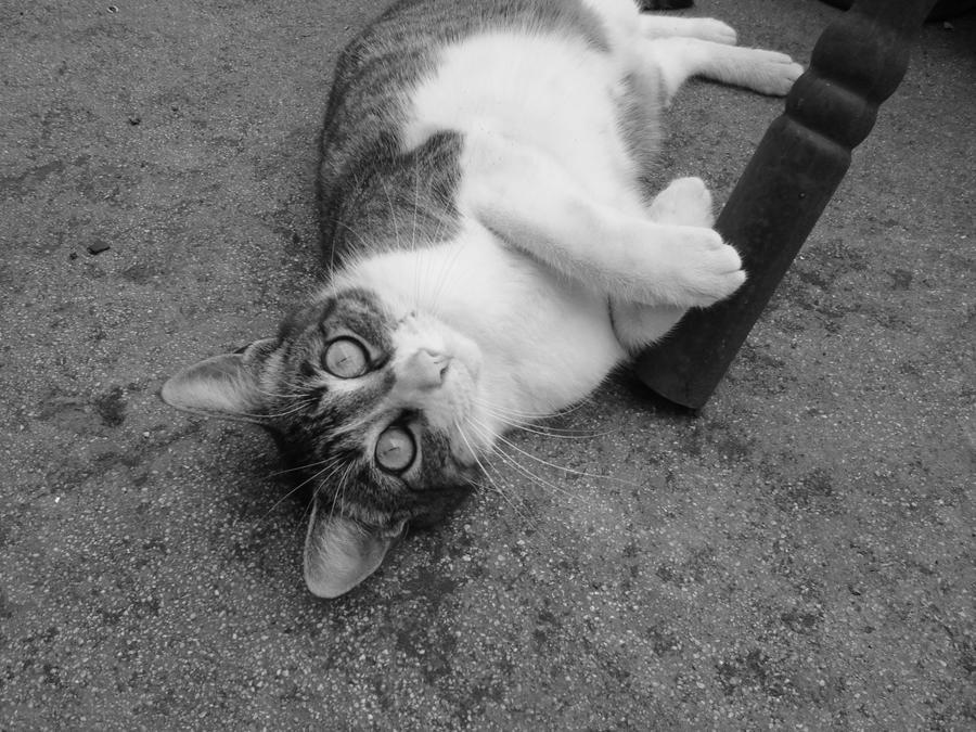 Cat ROFL
