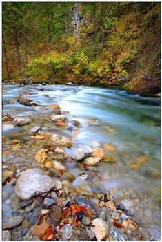 An Autumn Blur