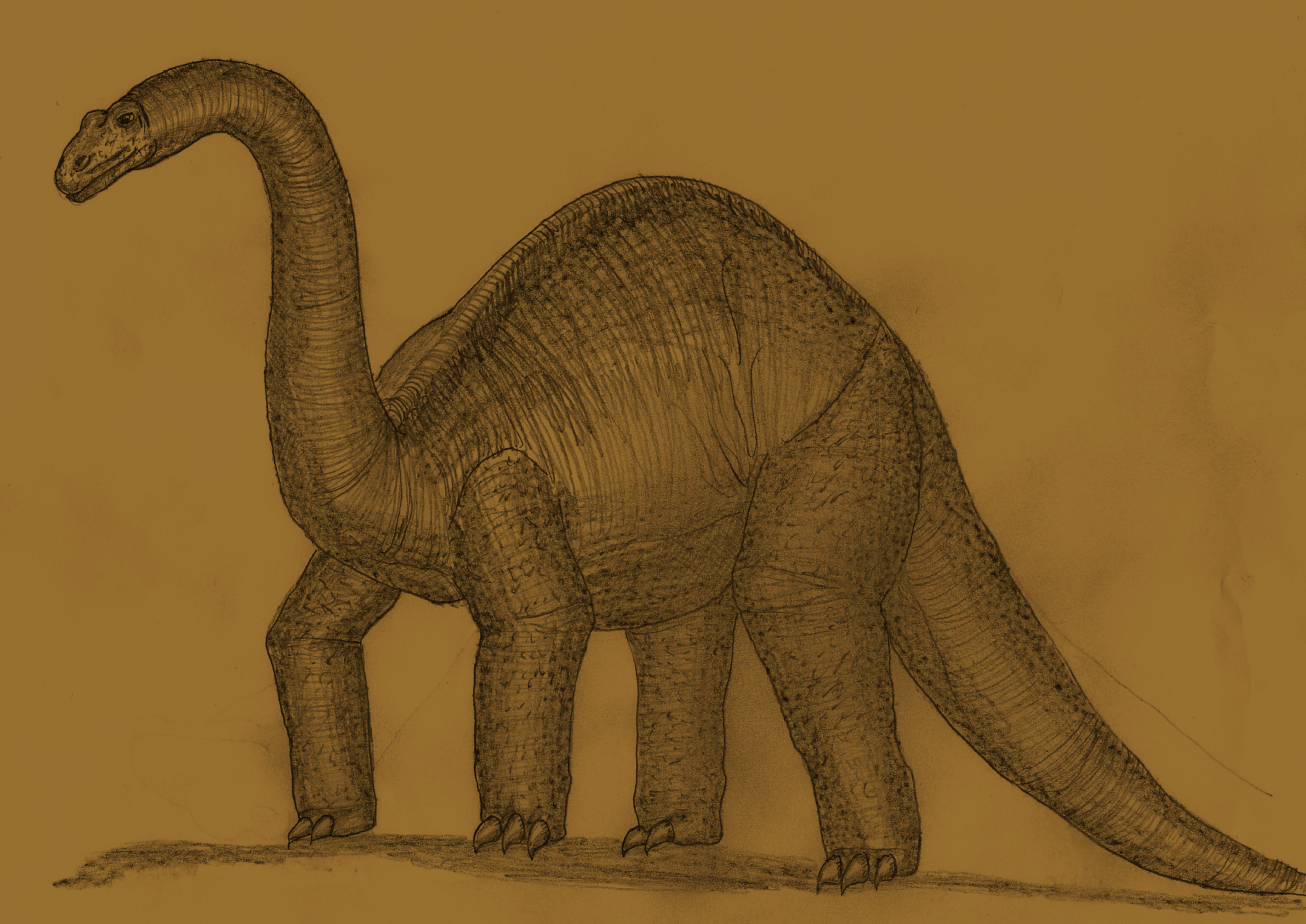 Brontosaurus summerleensis by Adiraiju on DeviantArt