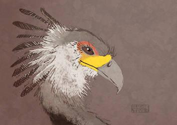 Secretary bird by Sludgetown