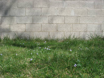 Grass and Wall Stock by moonfreak-stock
