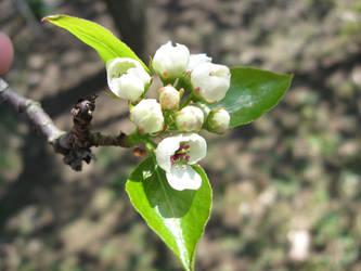 Flower Cluster Stock by moonfreak-stock