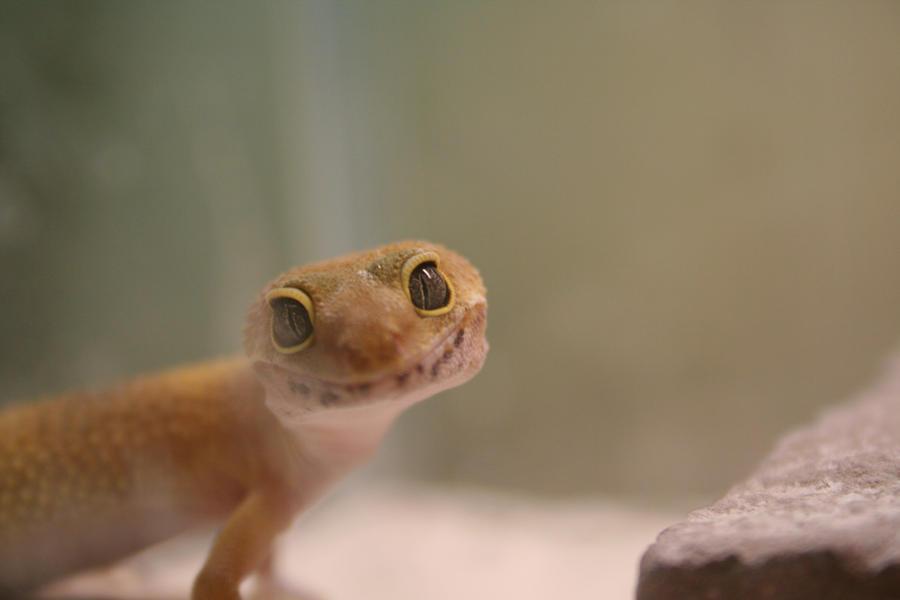Lizard's Smile by FluffyBlackBunny