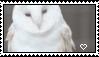 10: albino barn owl by gaIaxykin