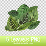 8 Leaves PNG