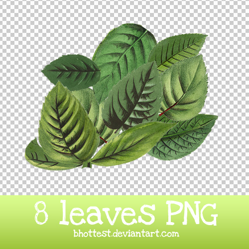 8 Leaves PNG By BHottest