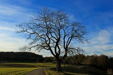 Winter Tree by ScraNo