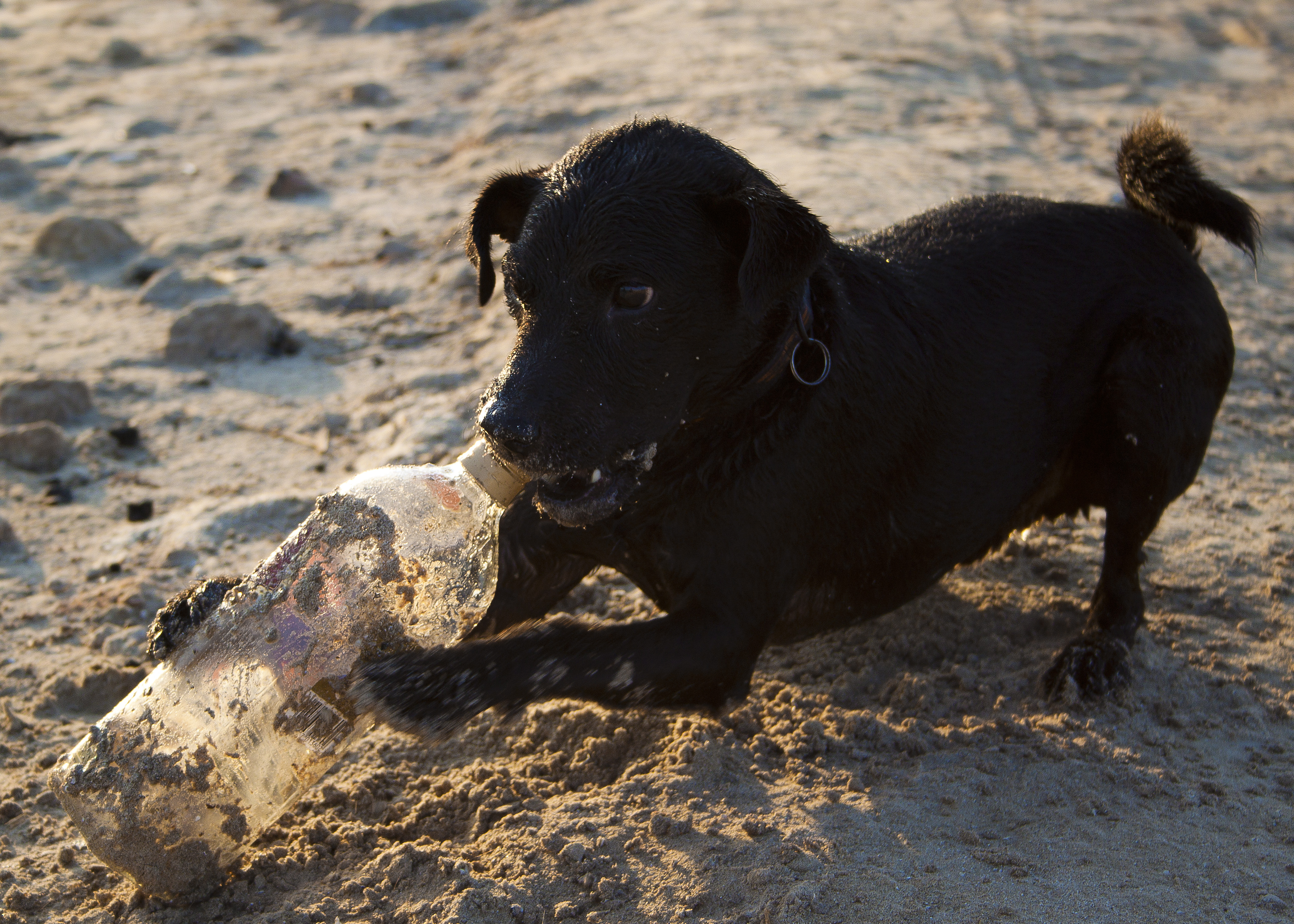 Drinkdog by Drinkdog